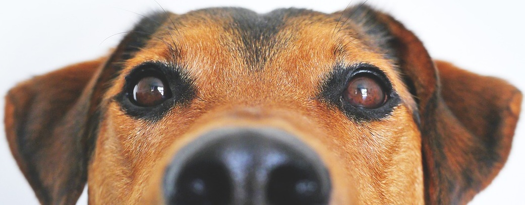 doggie-close-up